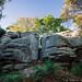 Eridge Rocks. Kent