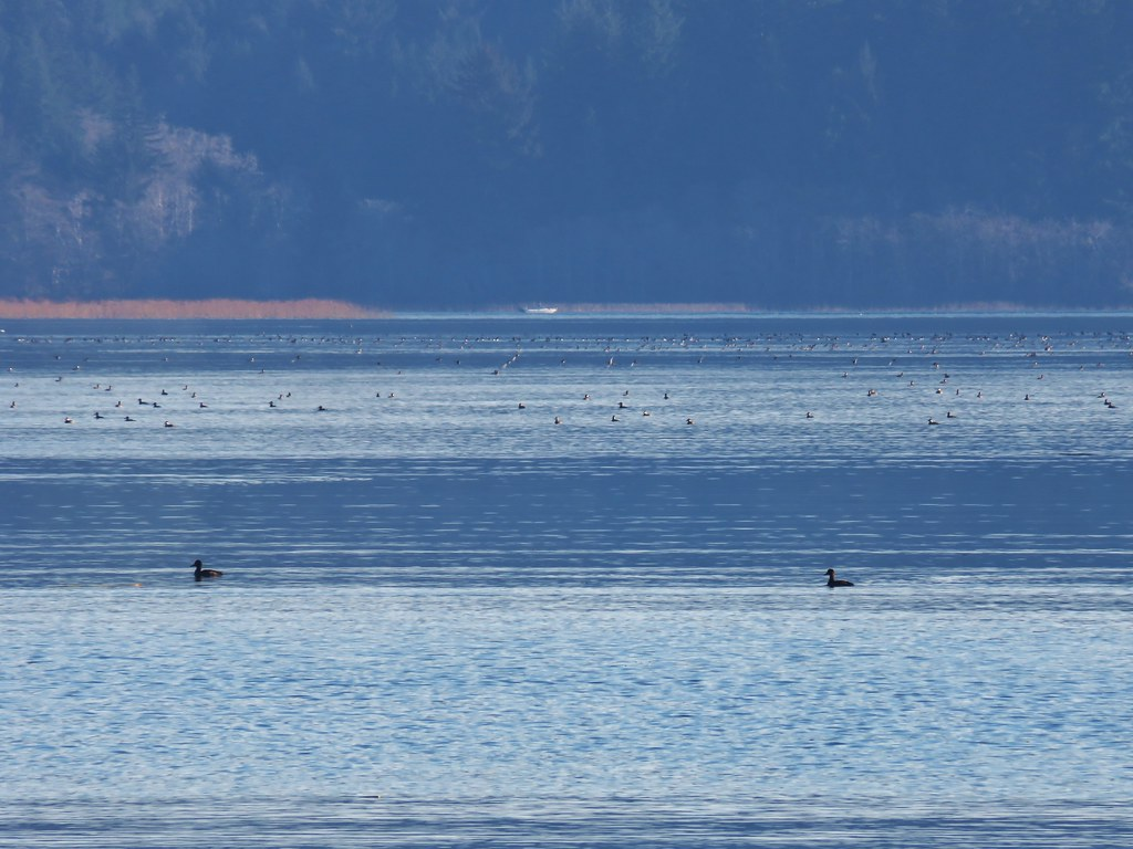 Birds on Siltcoos Lake