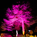 Brodsworth Hall Enchanted Light 2018
