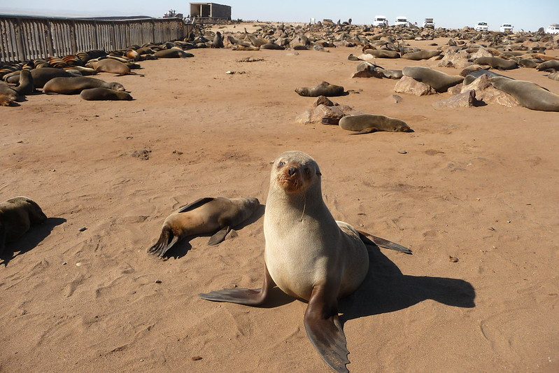 Cape Cross- Namibia