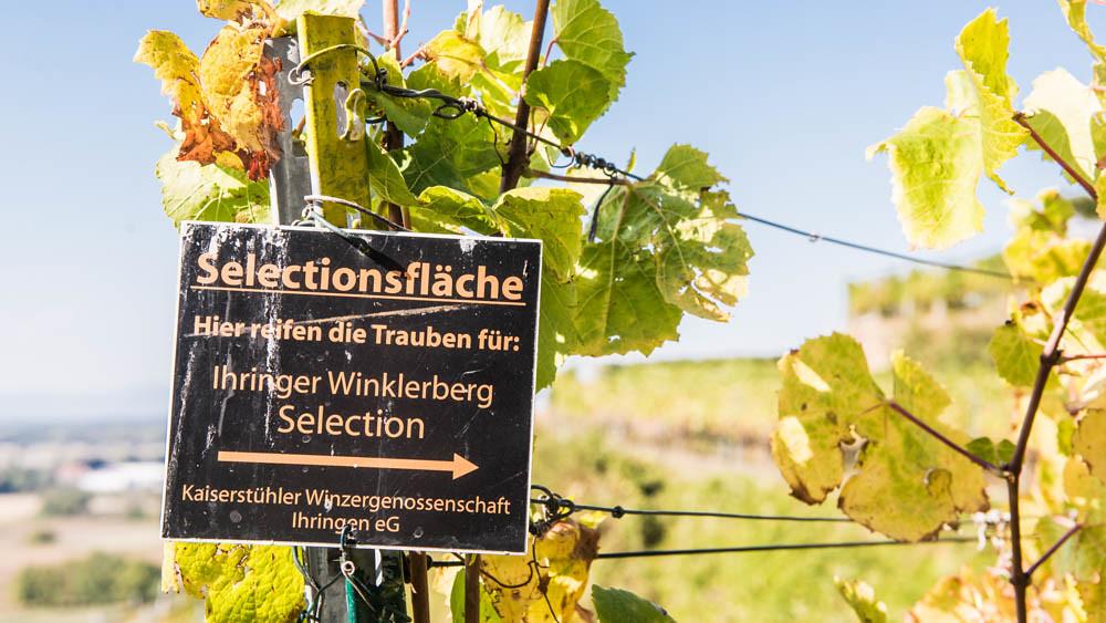 Winkklerberg_111