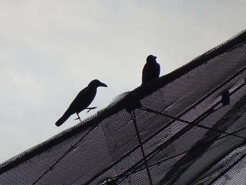 キャンベルタウン野鳥の森ブログ