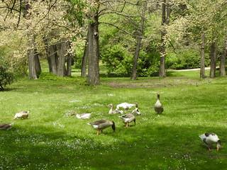 Malmsbury Botanic Garden & surrounds  (set of 12)