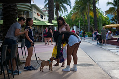 Miami - South Beach Puppy