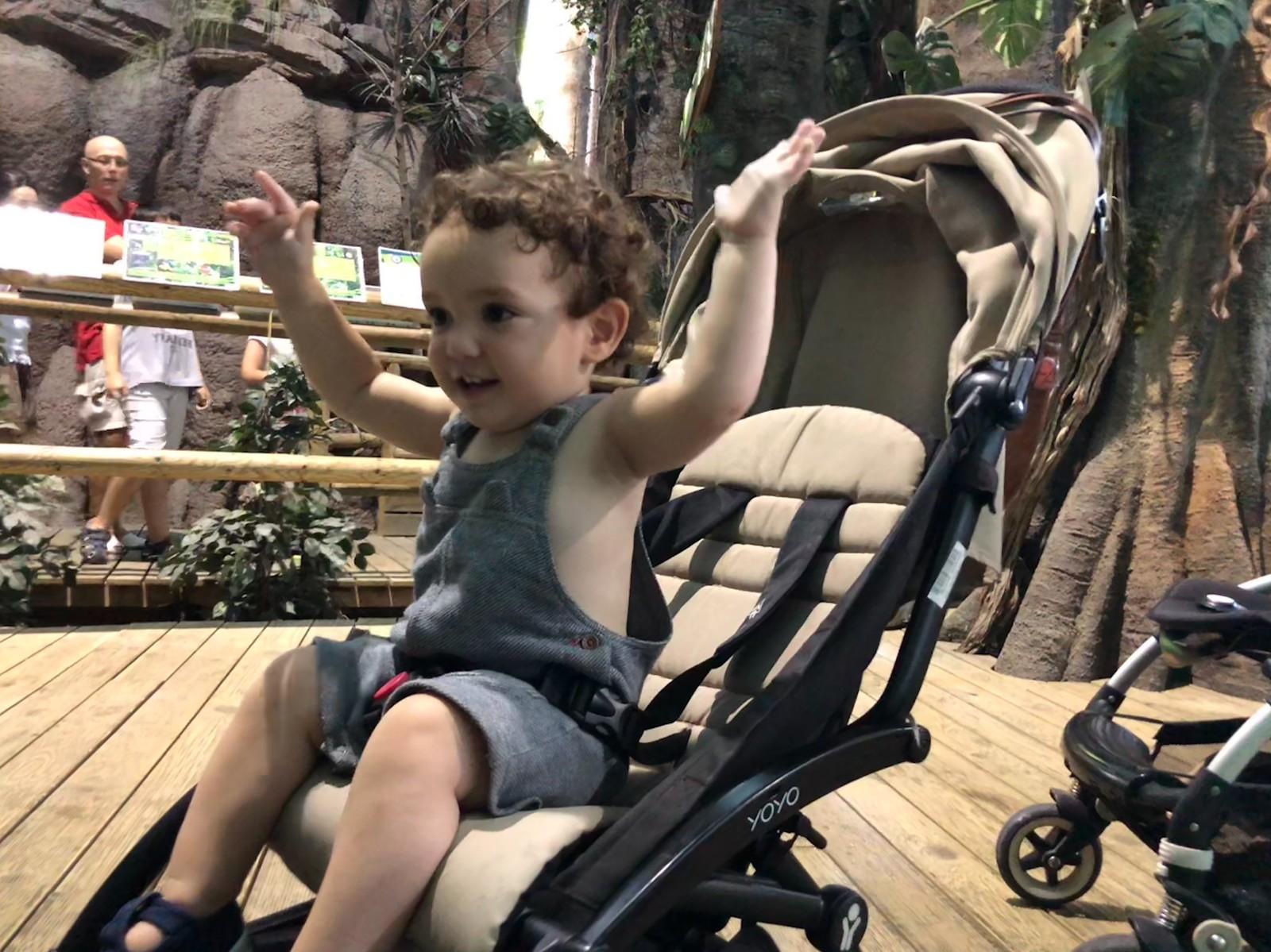 Samuel estaba encantado con las tortugas que les perseguían
