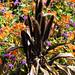 Brown: Dutch garden, Bantock Park
