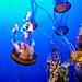 Medusa, Monterey Aquarium, California by szeke
