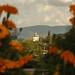 flores de cempasúchil por nava22mx