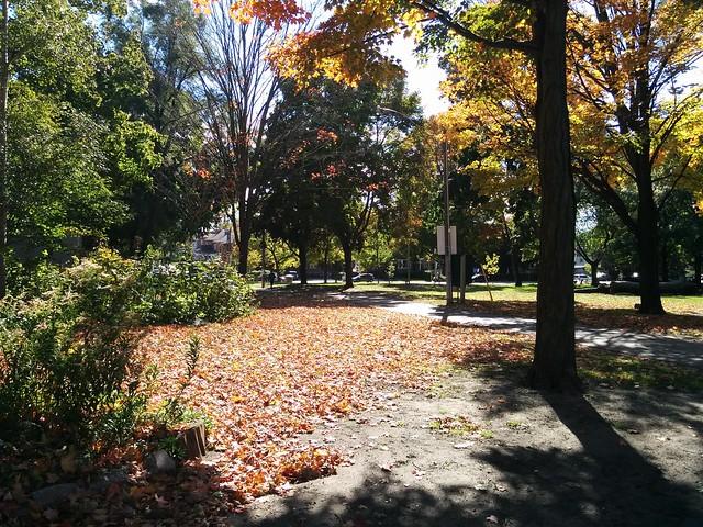 In Dufferin Grove Park (7) #toronto #dufferingrove #dufferingrovepark #parks #fall #autumn #latergram