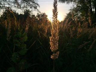 Sunny Grass II