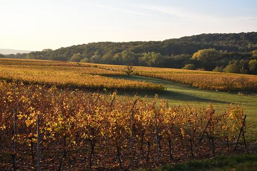 Le vignoble revêt sa parure d'automne