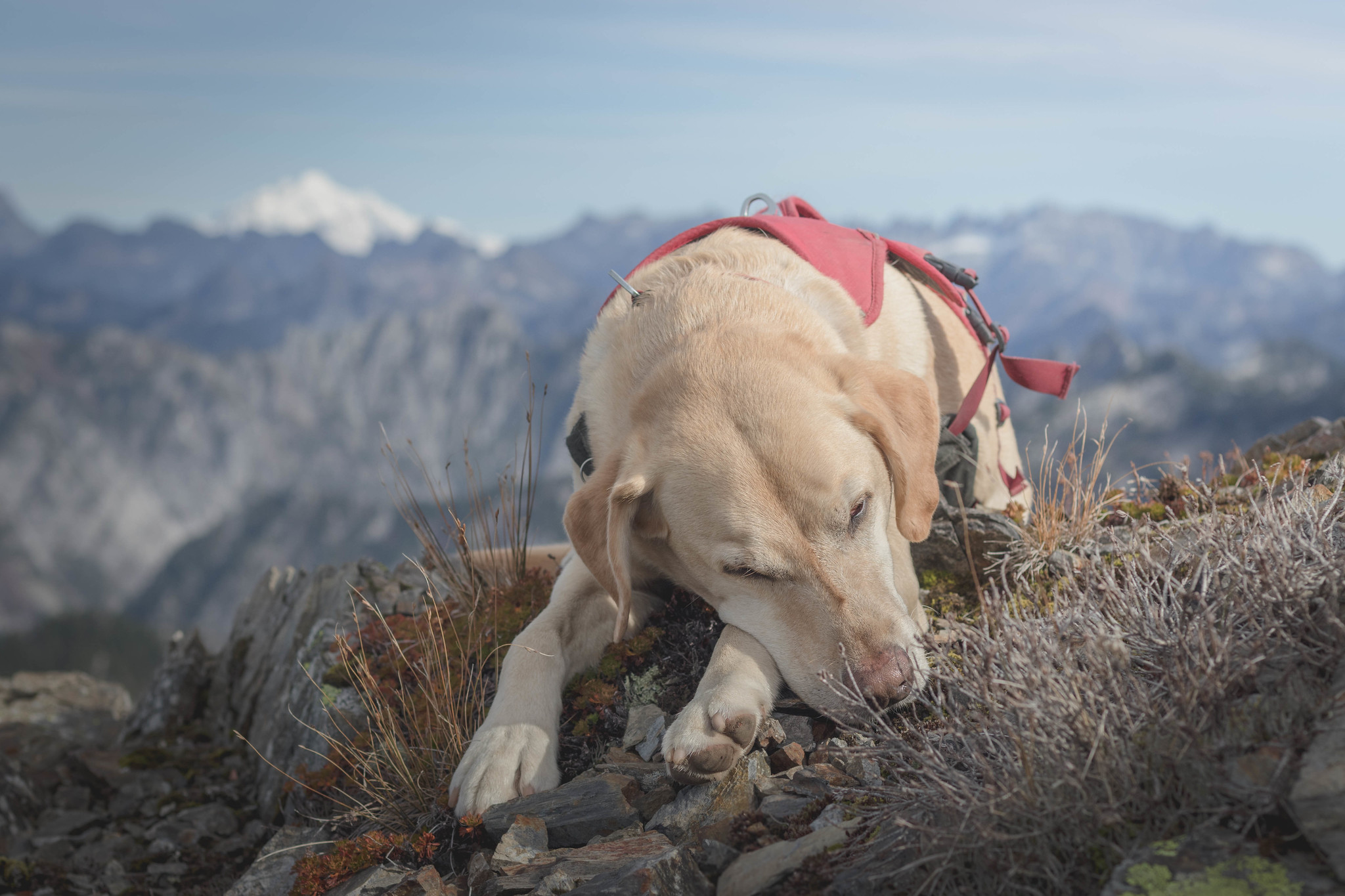 Summit dogs on Mount Stickney