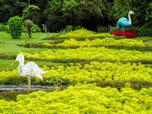 boquete chiriquí garden garten mijardínessujardín pan panama