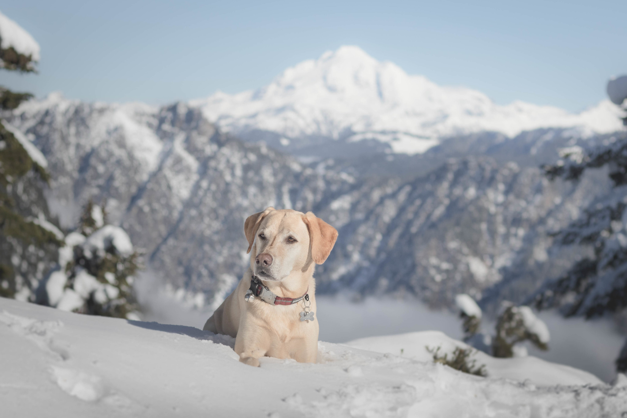 Summit dogs on Toil Peak