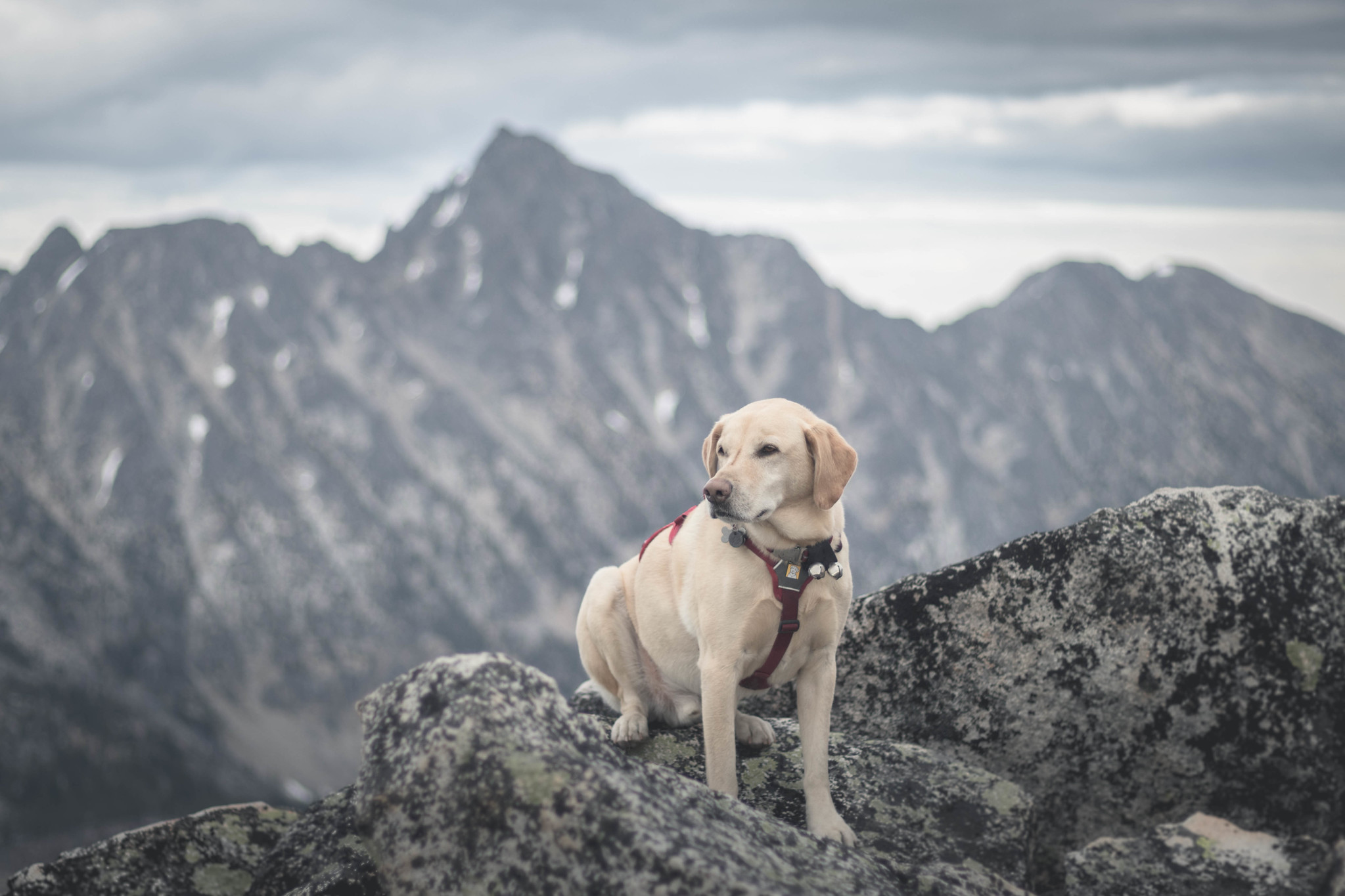 Summit dogs on Amos Peak
