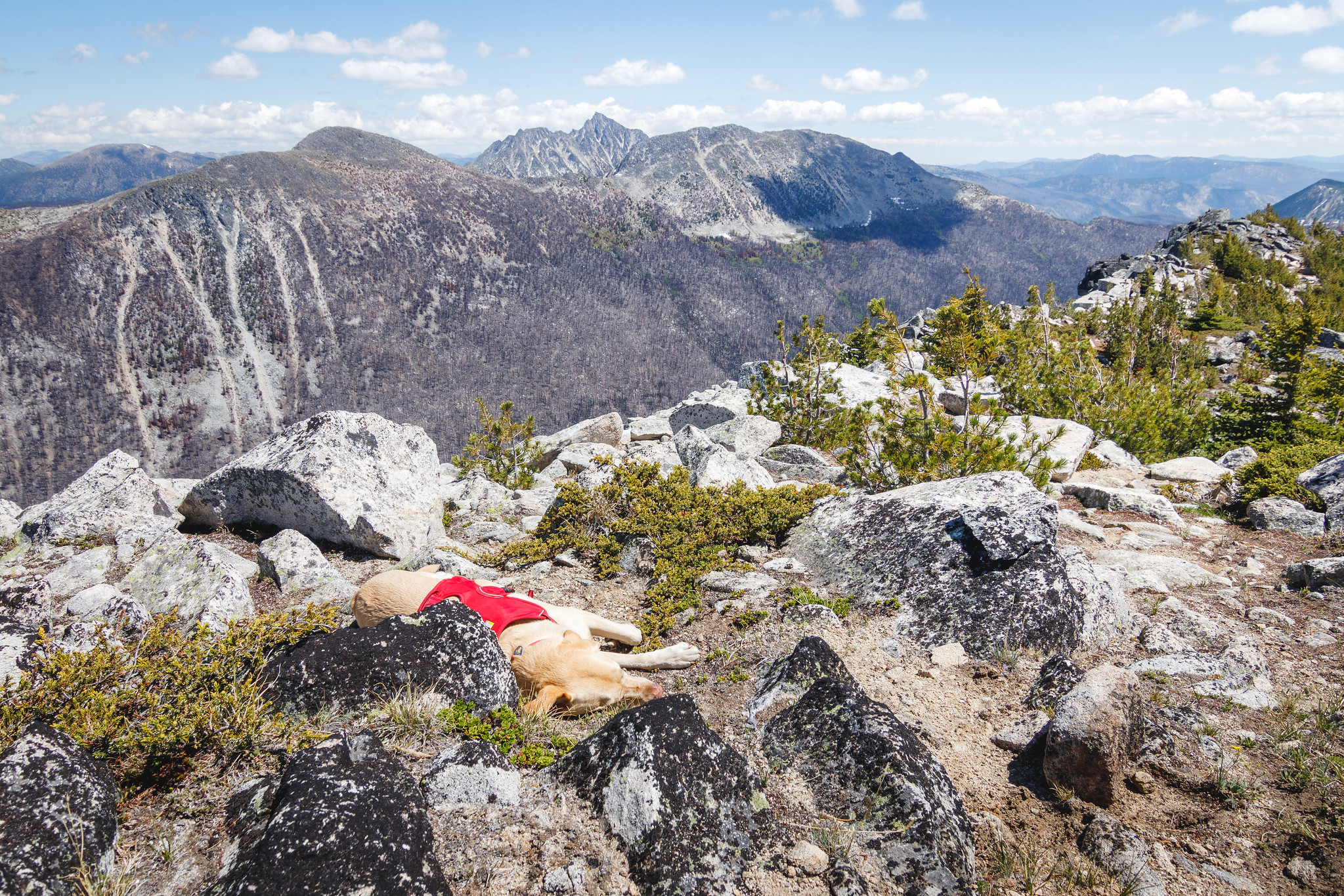 Summit dogs on Freds Mountain