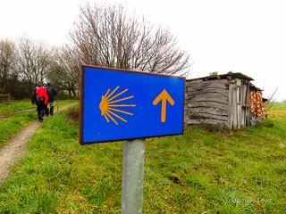 Camino Primitivo Etapa 7
