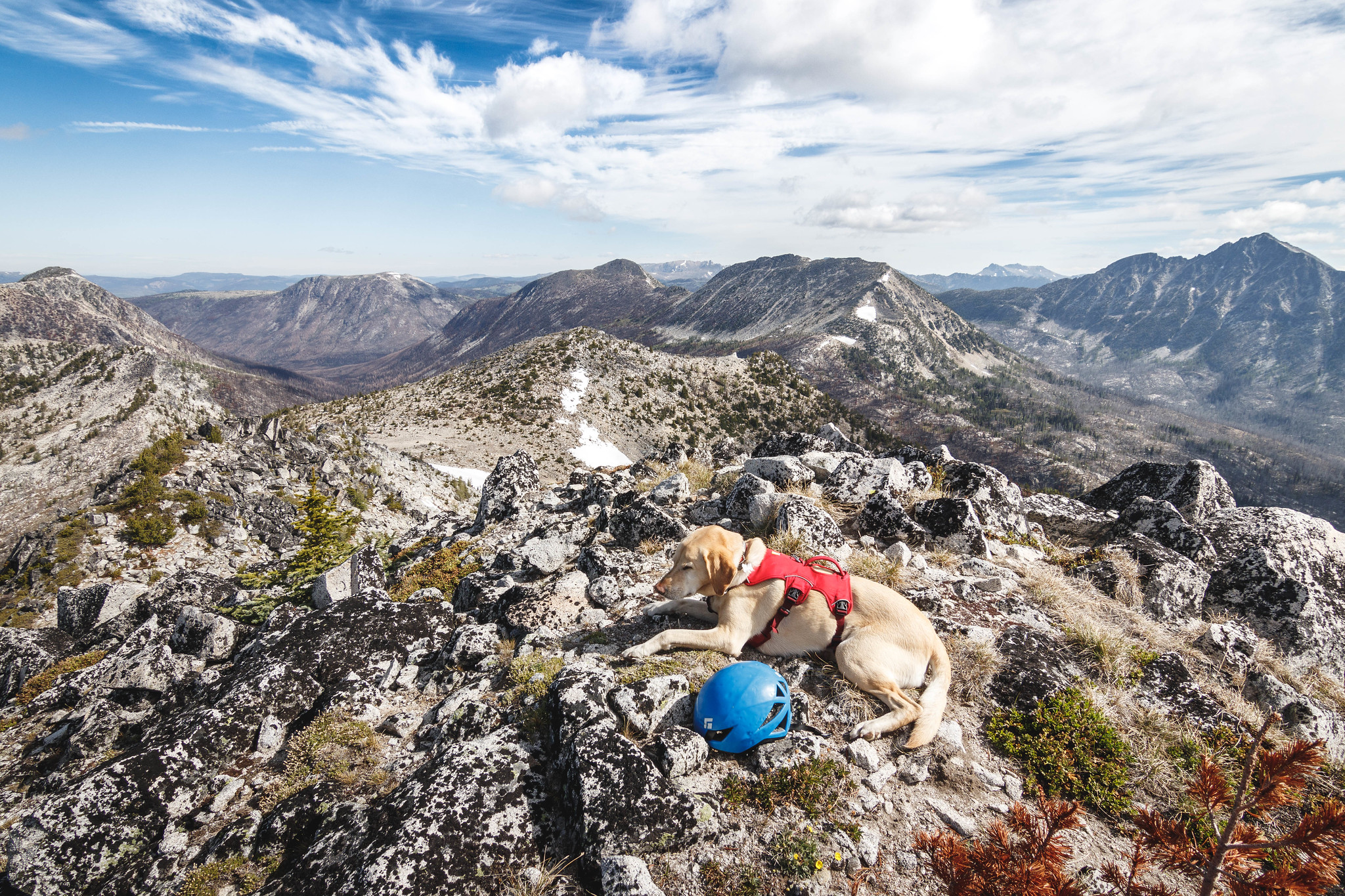 Summit dogs on Peepsight Mountain